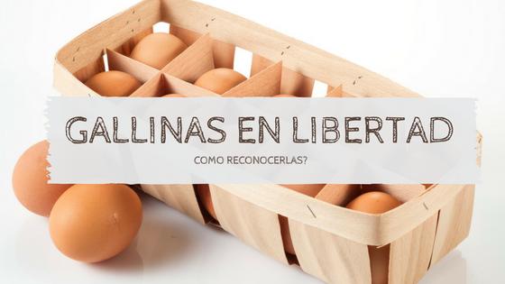 Pistas para diferenciar los huevos de gallinas criadas en libertad